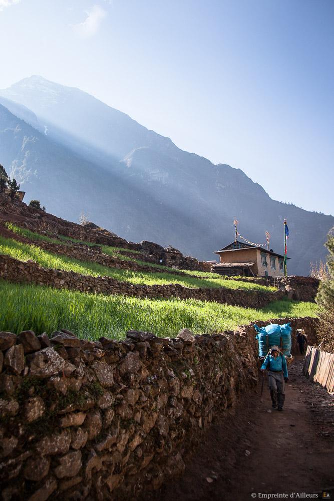 Sherpa au petit matin