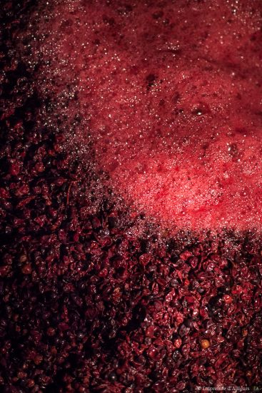 Vin en fermentation