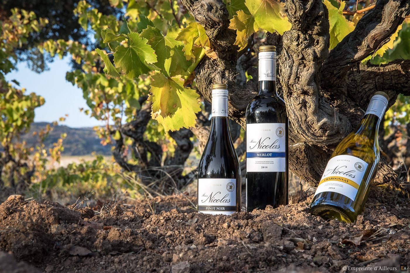 Bouteilles de vin dans les vignes
