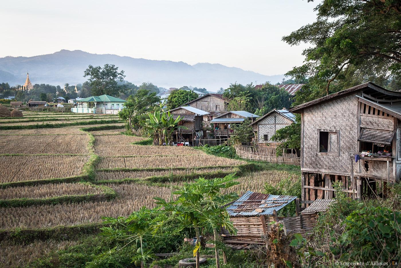 Rizière en bordure de village