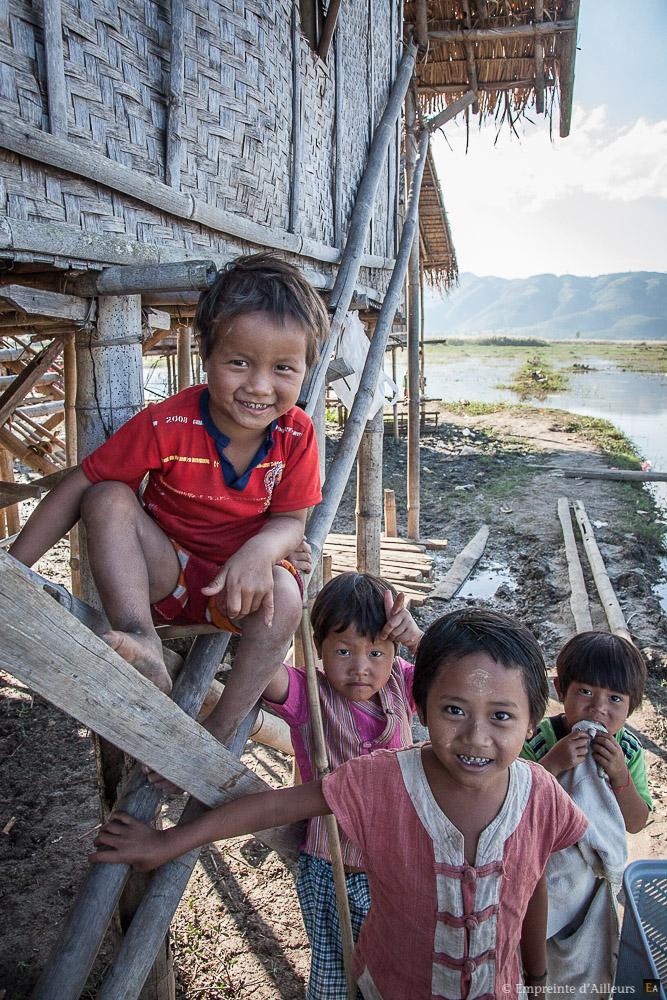 Jeunes birmans
