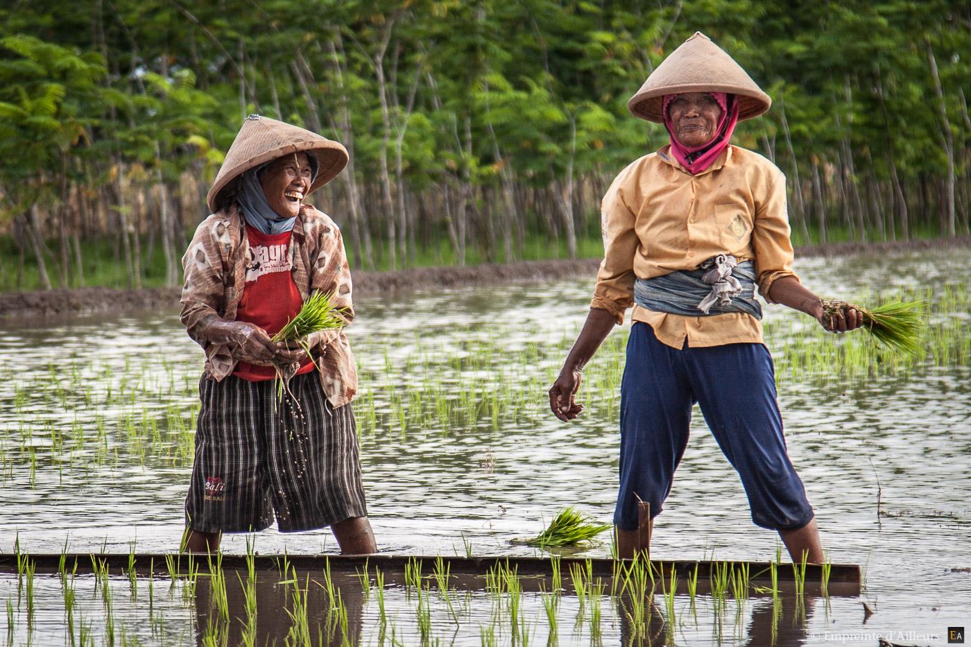 Mamies dans la riziere