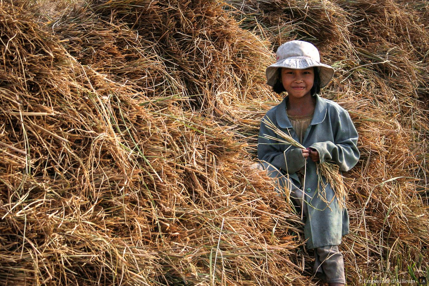 Fille de rizière