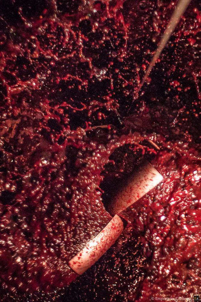 Vin en bio-dynamie